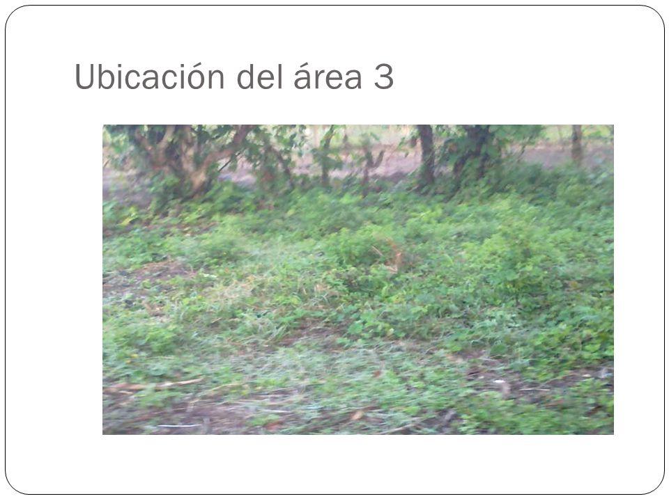 Ubicación del área 3