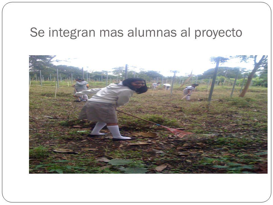 Los alumnos limpian las áreas
