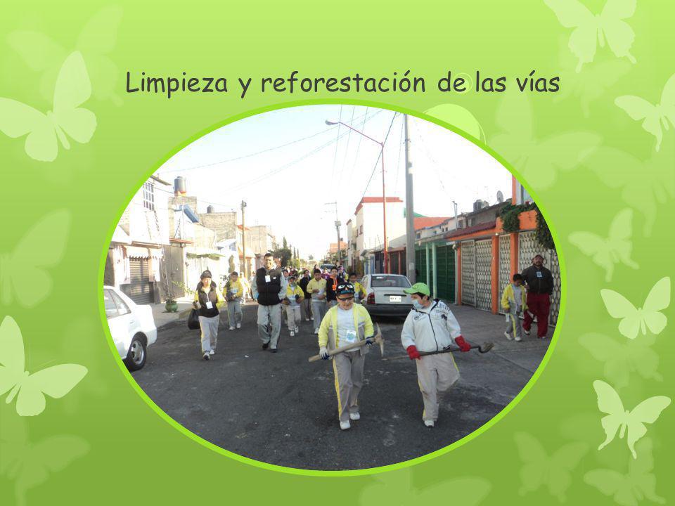 Limpieza y reforestación de las vías
