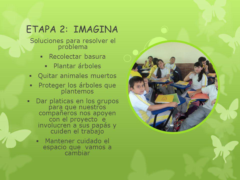 ETAPA 2: IMAGINA Soluciones para resolver el problema Recolectar basura Plantar árboles Quitar animales muertos Proteger los árboles que plantemos Dar