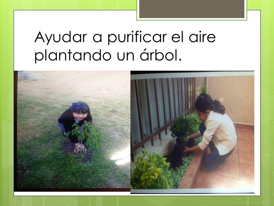 Ayudar a purificar el aire plantando un árbol.