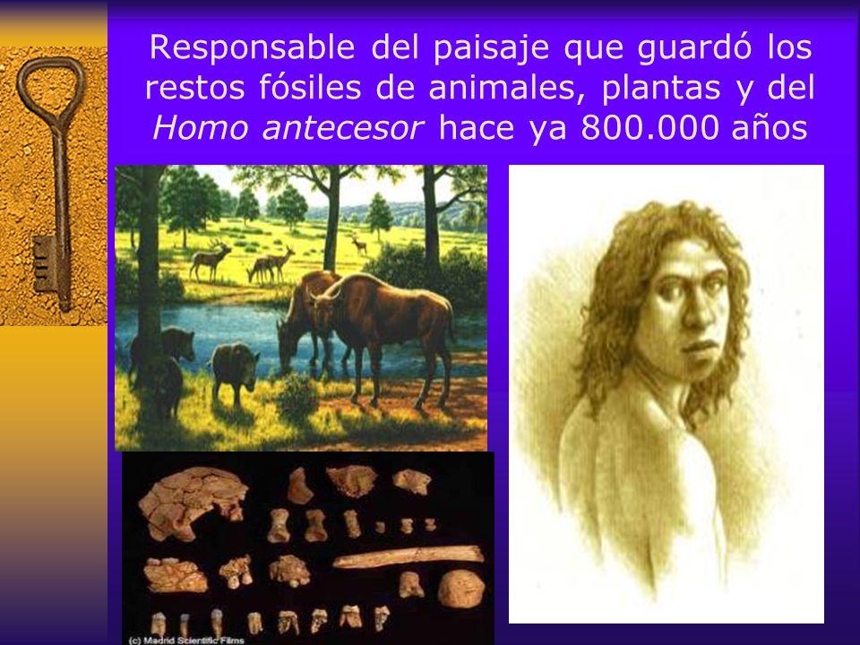 En sus entrañas se han descubierto los restos de falange de caballo y mandíbulas de oso más antiguos de toda Europa