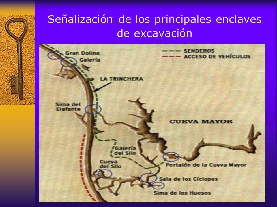En 1994 se iniciaron los trabajos en el yacimiento de Trinchera-Dolina con el objetivo de localizar fósiles que probasen el medio millón de años de antigüedad del yacimiento
