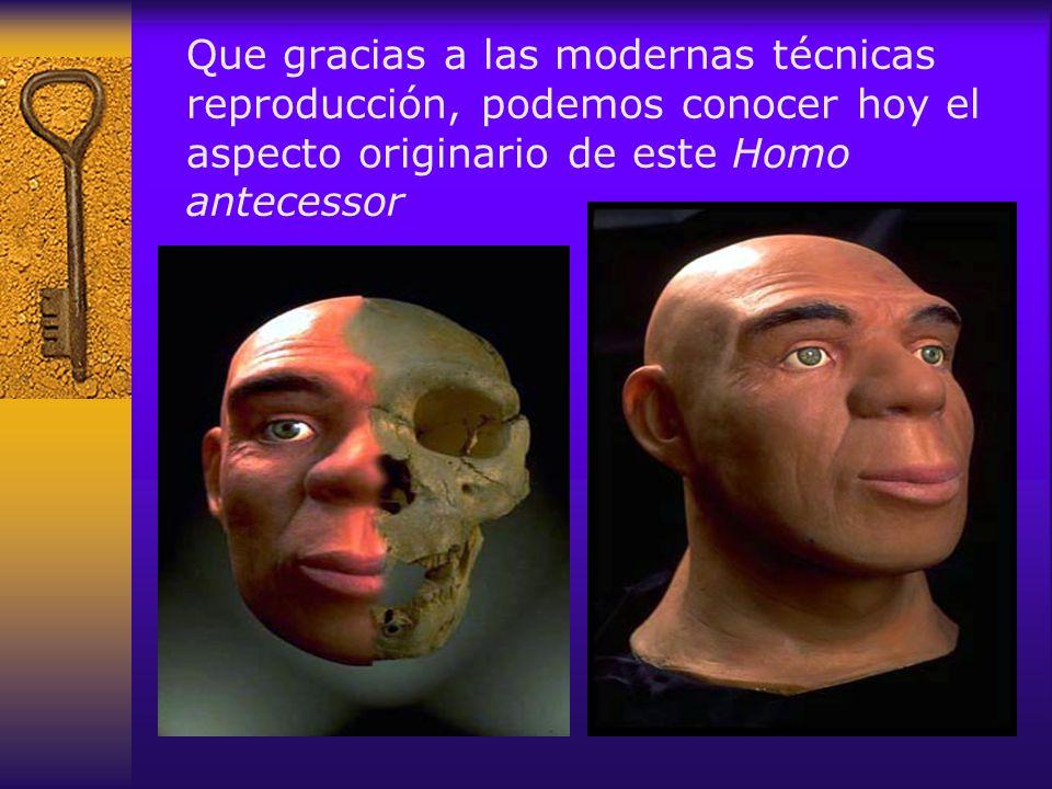 Además las investigaciones en la zona han permitido reproducir la vida cotidiana en el Pleistoceno de Atapuerca Escenas de caza y carroñeo en el interior de las cuevas