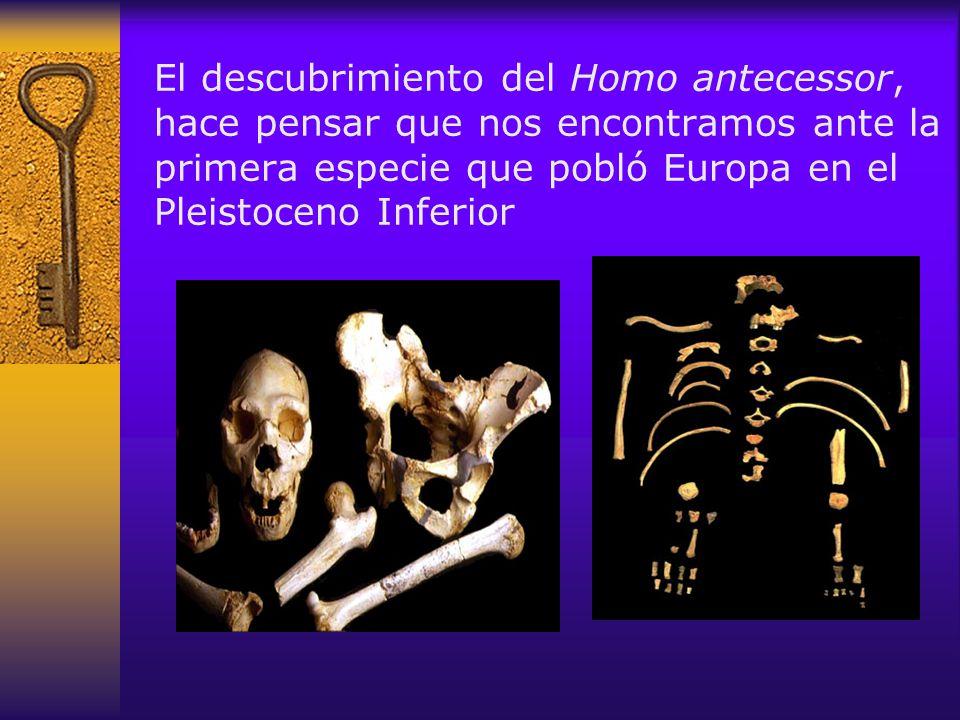 El equipo de investigación festejando el hallazgo de un cráneo de Homo antecessor Atapuerca no es un conjunto arqueológico cualquiera.