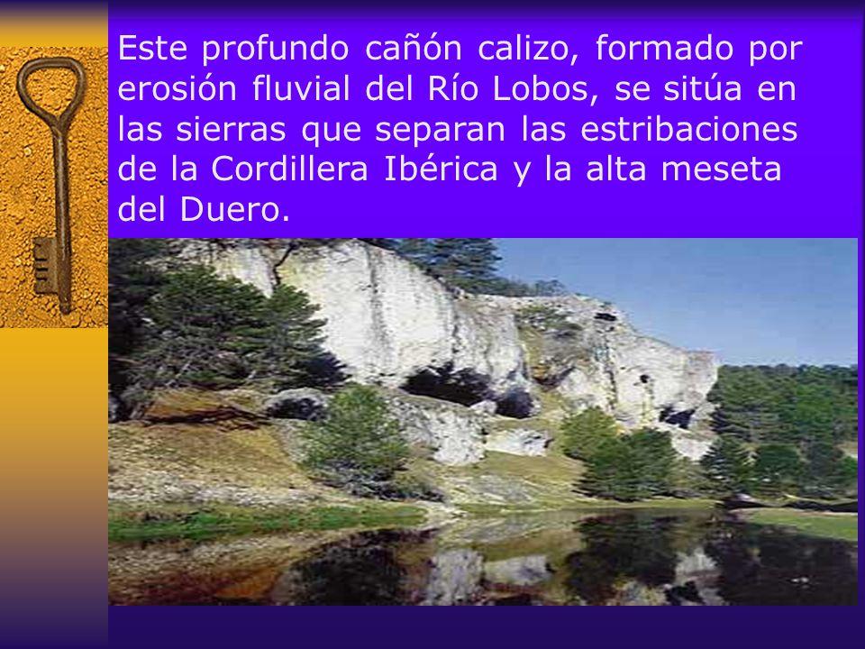 La paredes del cañón son el habitual refugio de aves,como el Águila Real; Halcón Peregrino, Azor, y los Buitre Común, Buitre Leonado.