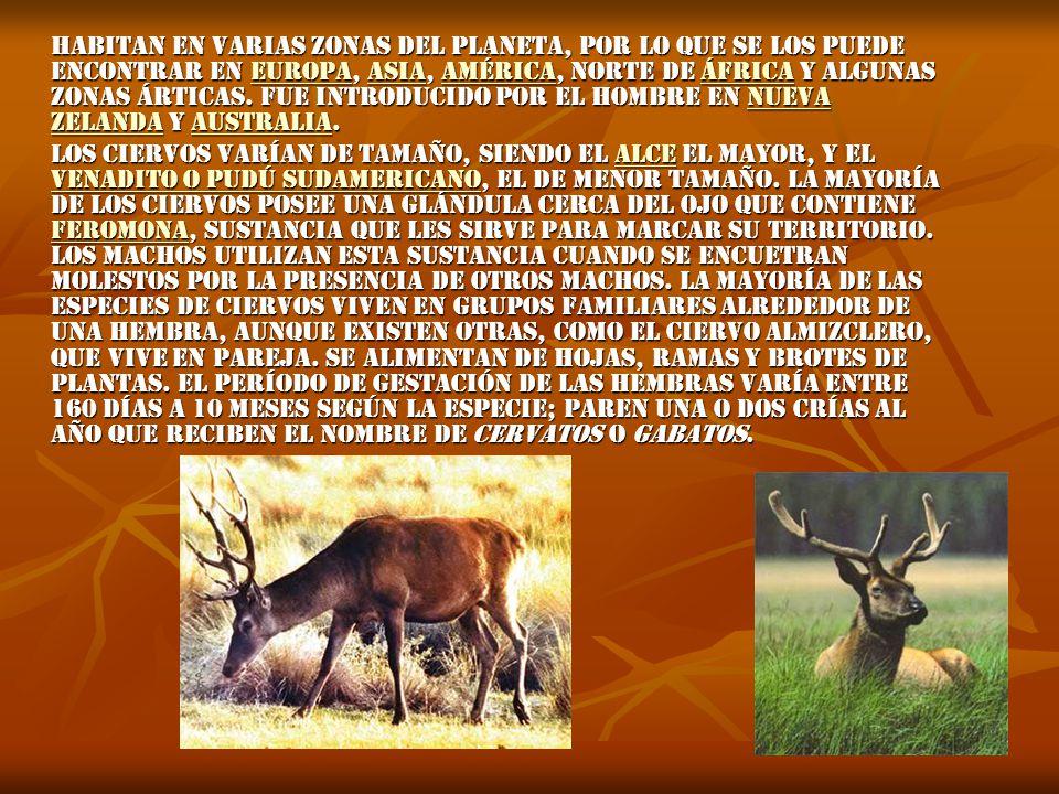 Habitan en varias zonas del planeta, por lo que se los puede encontrar en Europa, Asia, América, norte de África y algunas zonas árticas.
