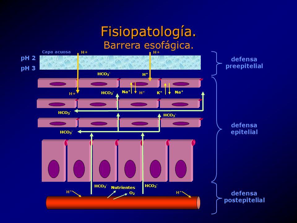 Fisiopatología. HCO 3 - Na + K+K+ H+H+ HCO 3 - H+H+ H+ pH 2 pH 3 HCO 3 - H+H+ H+H+ Capa acuosa H+ Nutrientes O2O2 defensa preepitelial defensa epiteli