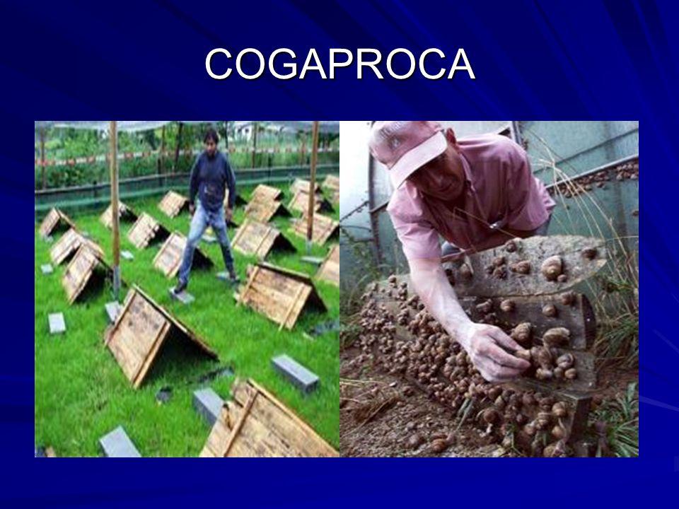 COGAPROCA