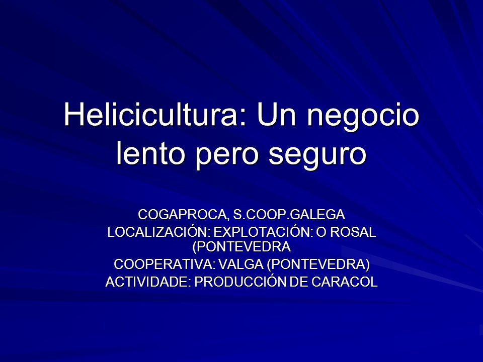Helicicultura: Un negocio lento pero seguro COGAPROCA, S.COOP.GALEGA LOCALIZACIÓN: EXPLOTACIÓN: O ROSAL (PONTEVEDRA COOPERATIVA: VALGA (PONTEVEDRA) AC