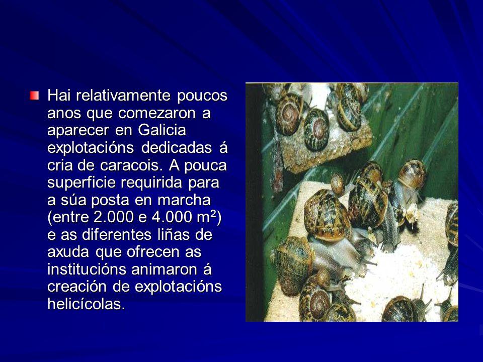 Hai relativamente poucos anos que comezaron a aparecer en Galicia explotacións dedicadas á cria de caracois. A pouca superficie requirida para a súa p