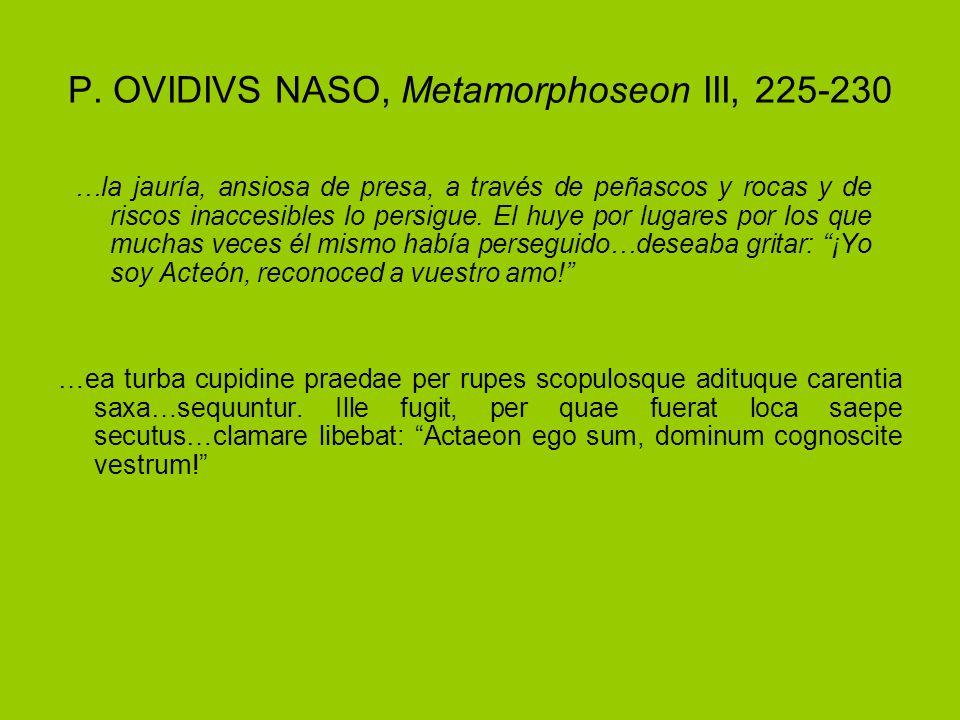 P. OVIDIVS NASO, Metamorphoseon III, 225-230 …ea turba cupidine praedae per rupes scopulosque adituque carentia saxa…sequuntur. Ille fugit, per quae f