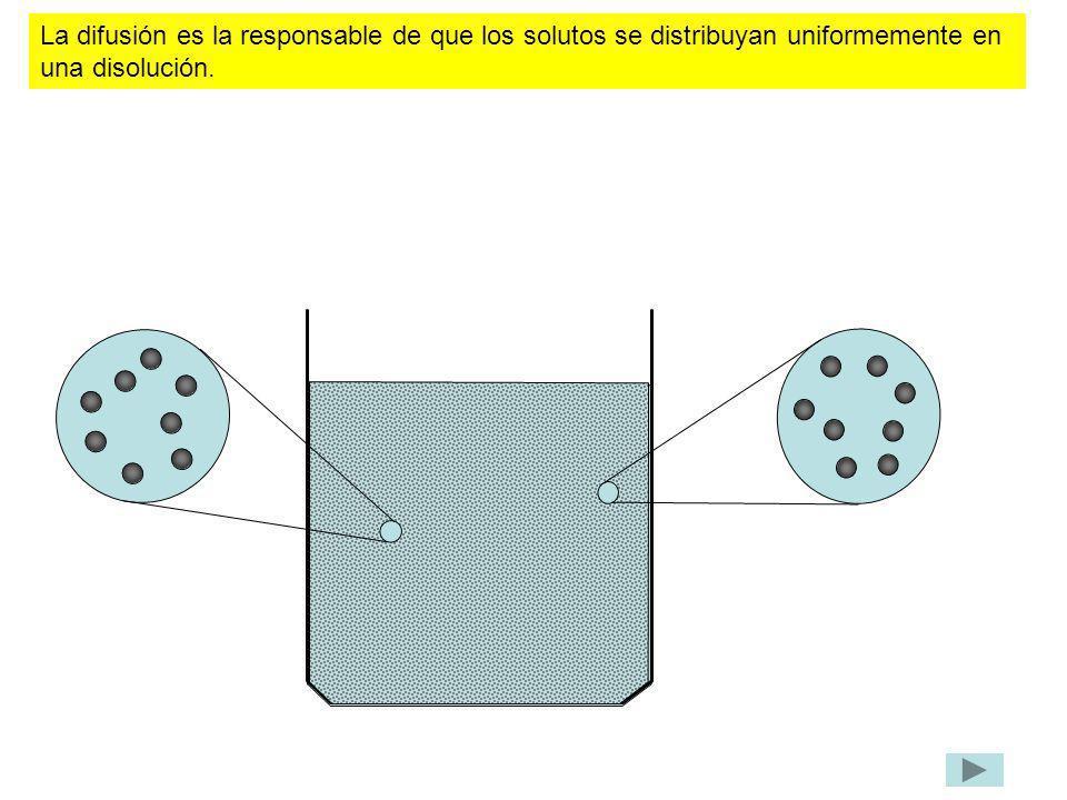 La difusión es la responsable de que los solutos se distribuyan uniformemente en una disolución.