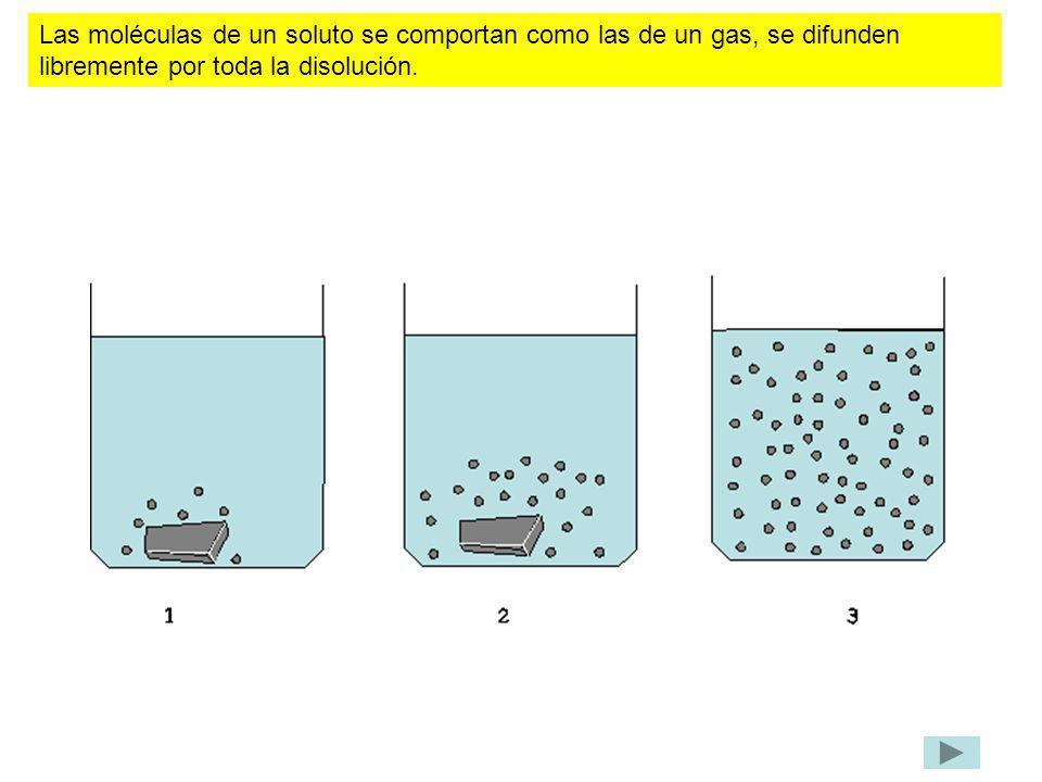 Las moléculas de un soluto se comportan como las de un gas, se difunden libremente por toda la disolución.