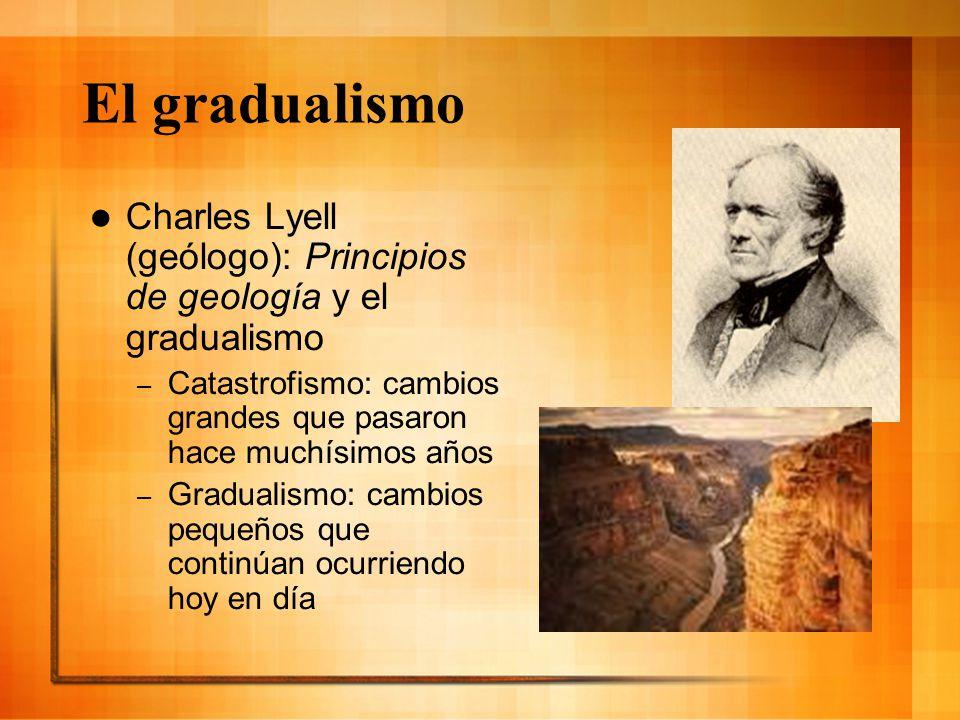 El gradualismo Charles Lyell (geólogo): Principios de geología y el gradualismo – Catastrofismo: cambios grandes que pasaron hace muchísimos años – Gr