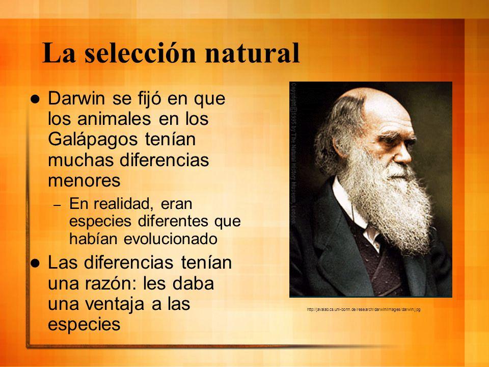 La selección natural Darwin se fijó en que los animales en los Galápagos tenían muchas diferencias menores – En realidad, eran especies diferentes que