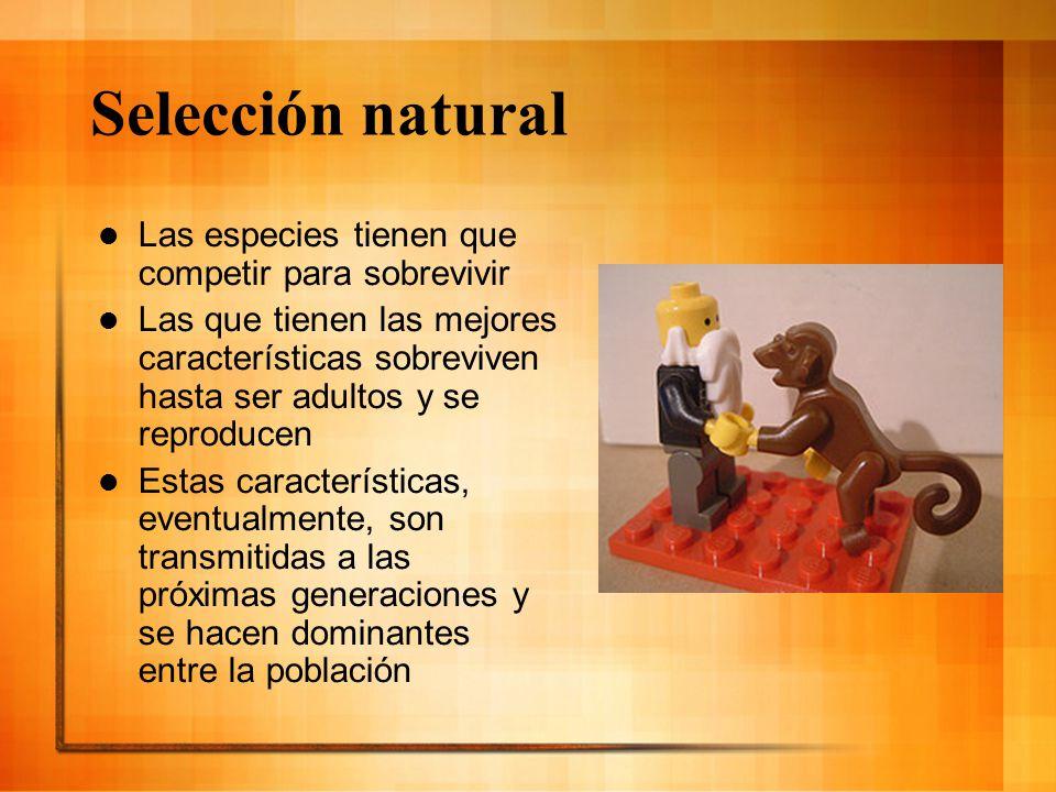 Selección natural Las especies tienen que competir para sobrevivir Las que tienen las mejores características sobreviven hasta ser adultos y se reprod