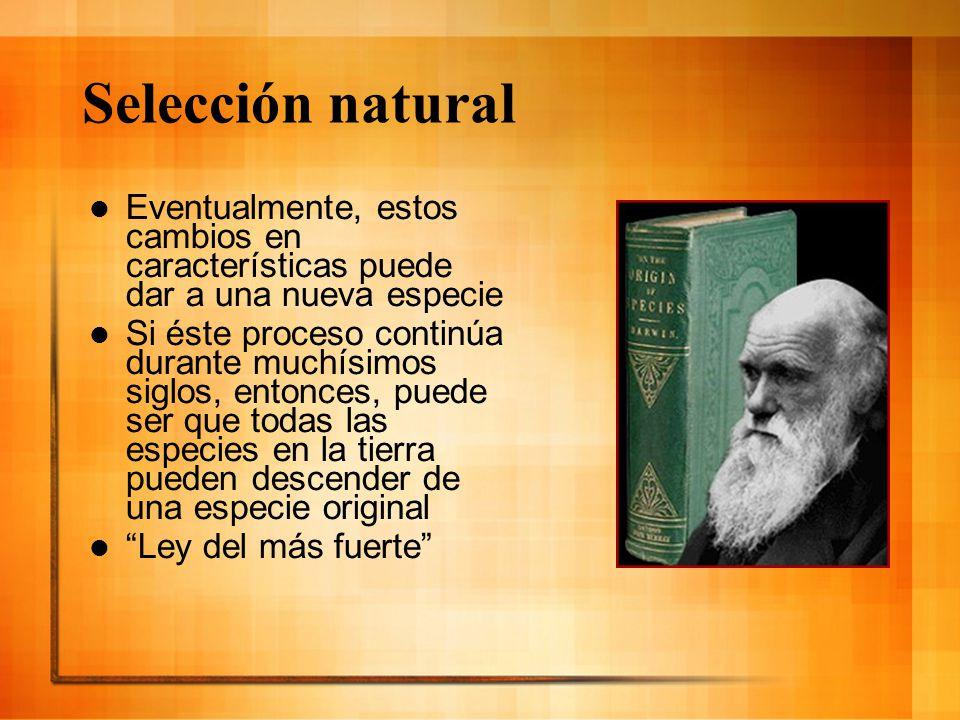 Selección natural Eventualmente, estos cambios en características puede dar a una nueva especie Si éste proceso continúa durante muchísimos siglos, en