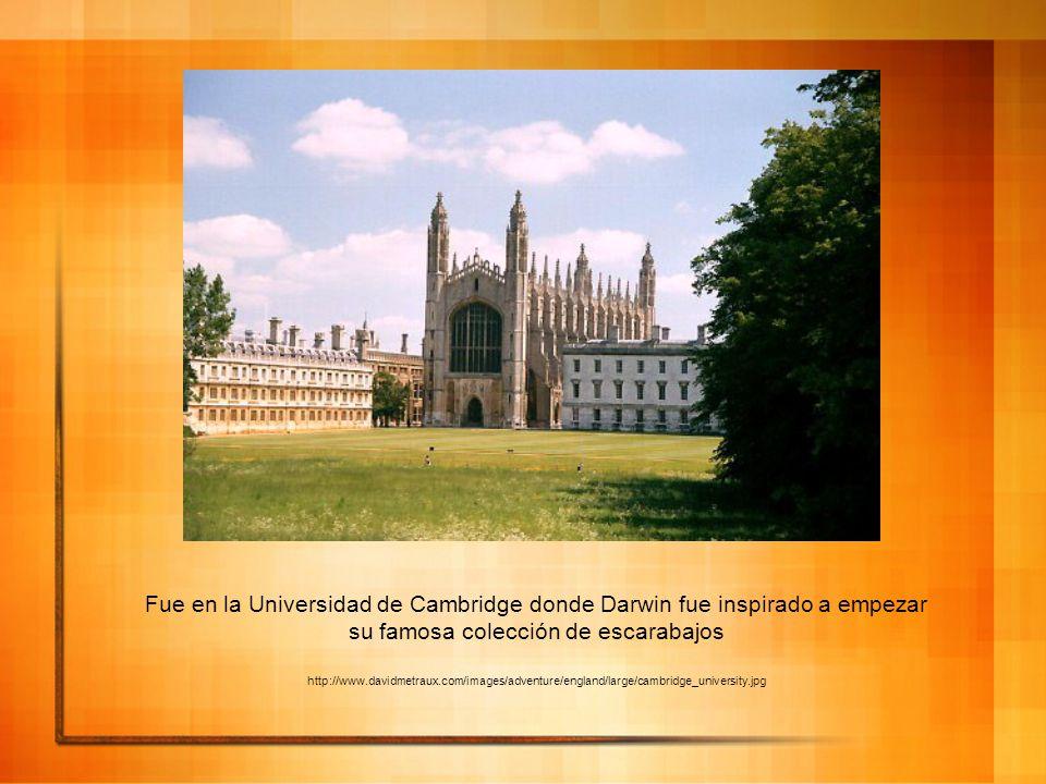 Fue en la Universidad de Cambridge donde Darwin fue inspirado a empezar su famosa colección de escarabajos http://www.davidmetraux.com/images/adventur