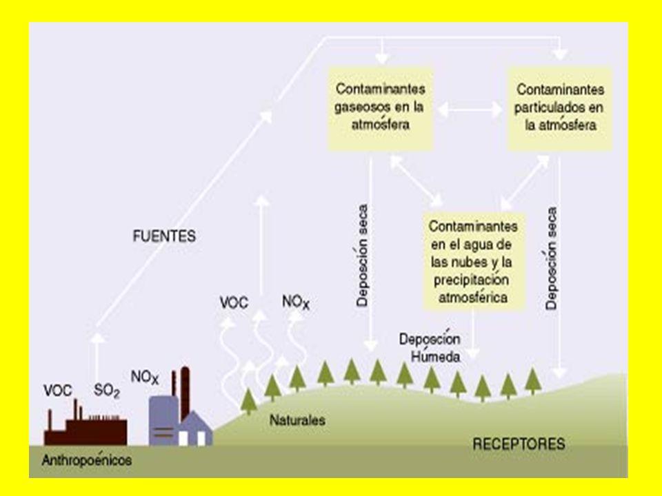 A través del ciclo hidrológico, el agua se mueve en plantas y animales, ríos, lagos y océanos, evaporándose a la atmósfera y formando nubes que viajan