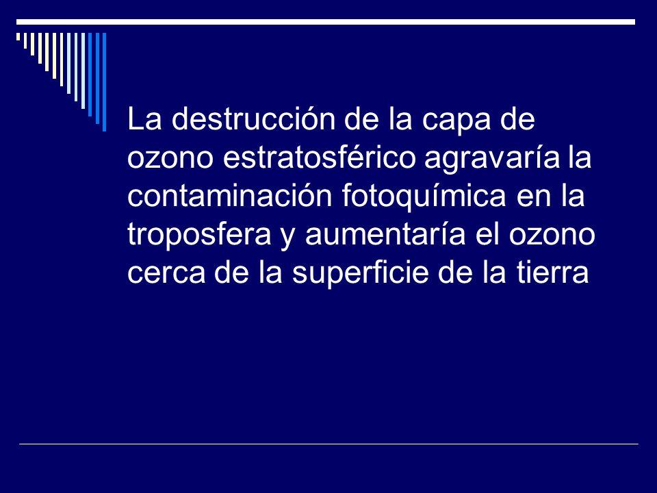 La destrucción de la capa de ozono estratosférico agravaría la contaminación fotoquímica en la troposfera y aumentaría el ozono cerca de la superficie de la tierra
