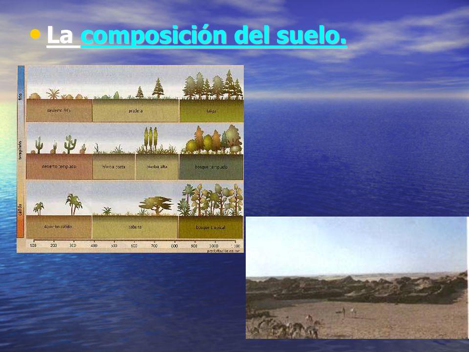 La composición del suelo. La composición del suelo.