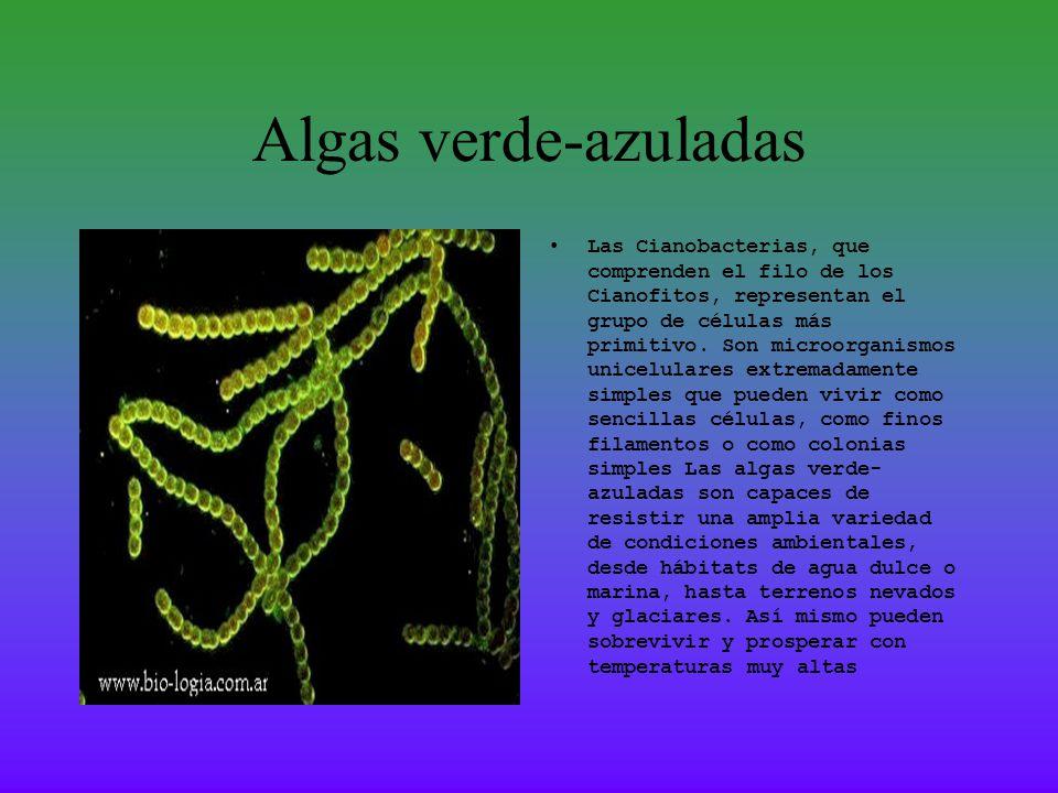 Algas Filamentosas