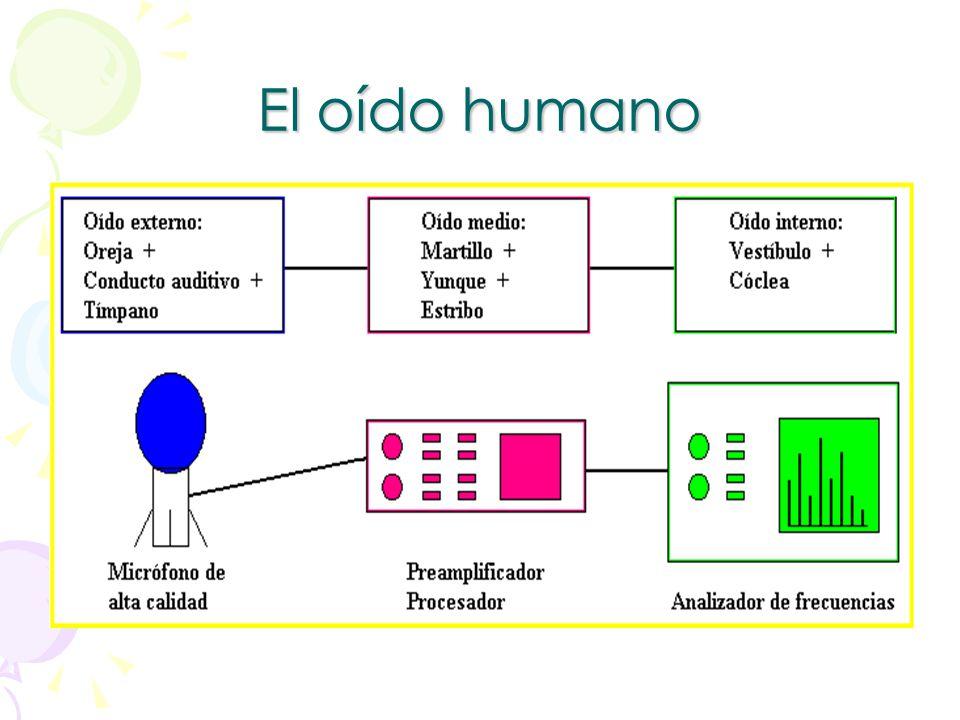 Oído humano El oído es el órgano responsable no sólo de la audición sino también del equilibrio.