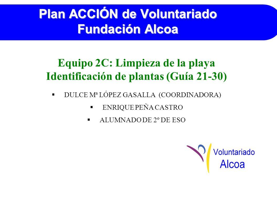 Plan ACCIÓN de Voluntariado Fundación Alcoa Equipo 2C: Limpieza de la playa Identificación de plantas (Guía 21-30) DULCE Mª LÓPEZ GASALLA (COORDINADORA) ENRIQUE PEÑA CASTRO ALUMNADO DE 2º DE ESO