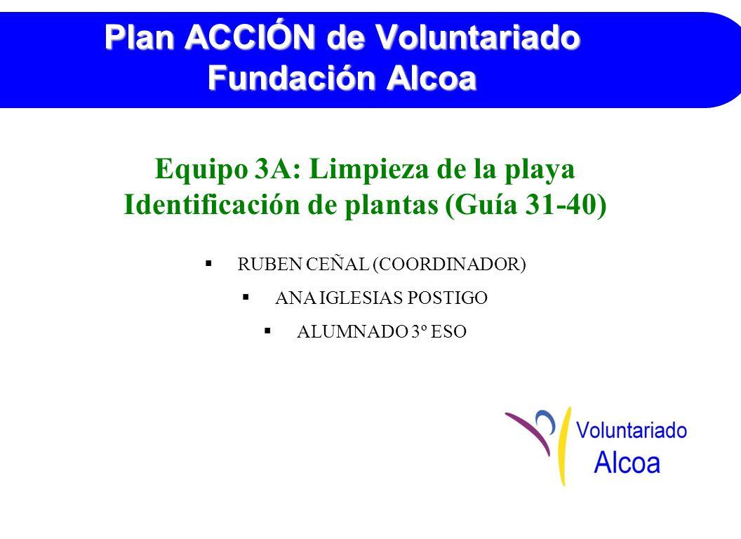 Plan ACCIÓN de Voluntariado Fundación Alcoa Equipo 3A: Limpieza de la playa Identificación de plantas (Guía 31-40) RUBEN CEÑAL (COORDINADOR) ANA IGLESIAS POSTIGO ALUMNADO 3º ESO