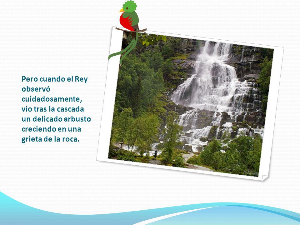 Pero cuando el Rey observó cuidadosamente, vio tras la cascada un delicado arbusto creciendo en una grieta de la roca.