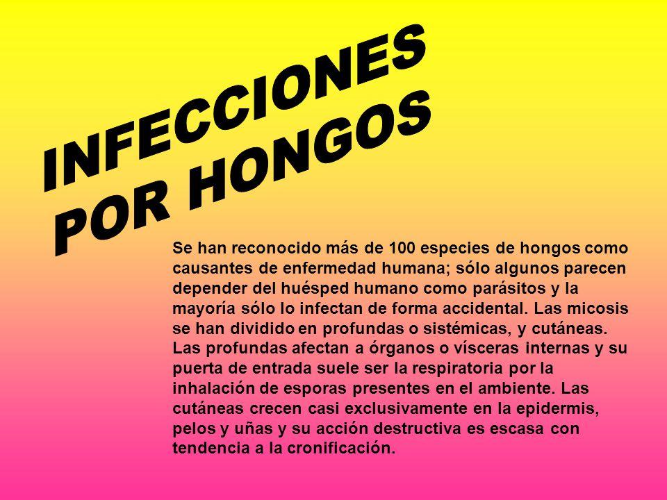 Se han reconocido más de 100 especies de hongos como causantes de enfermedad humana; sólo algunos parecen depender del huésped humano como parásitos y la mayoría sólo lo infectan de forma accidental.