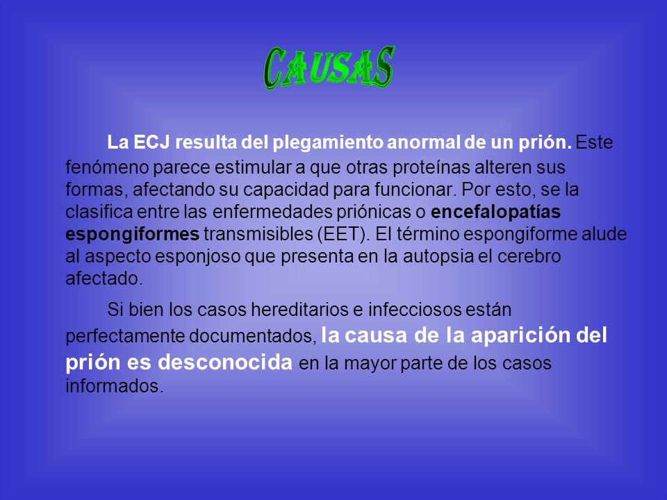 La ECJ resulta del plegamiento anormal de un prión. Este fenómeno parece estimular a que otras proteínas alteren sus formas, afectando su capacidad pa