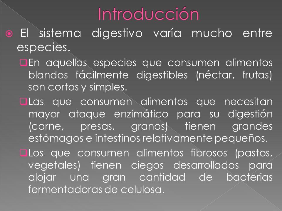 El sistema digestivo varía mucho entre especies. En aquellas especies que consumen alimentos blandos fácilmente digestibles (néctar, frutas) son corto