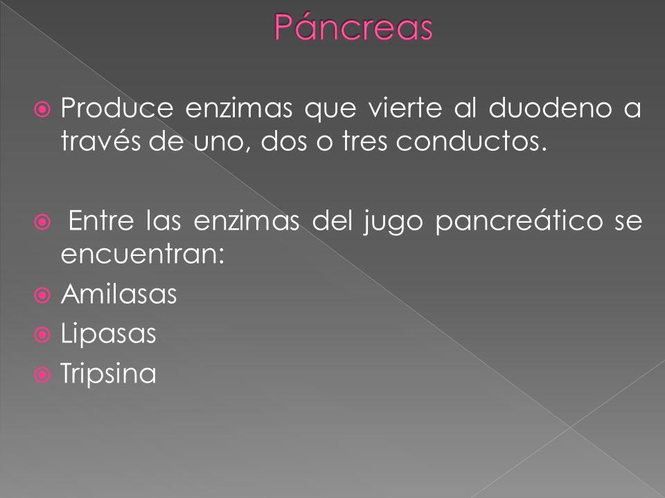 Produce enzimas que vierte al duodeno a través de uno, dos o tres conductos. Entre las enzimas del jugo pancreático se encuentran: Amilasas Lipasas Tr