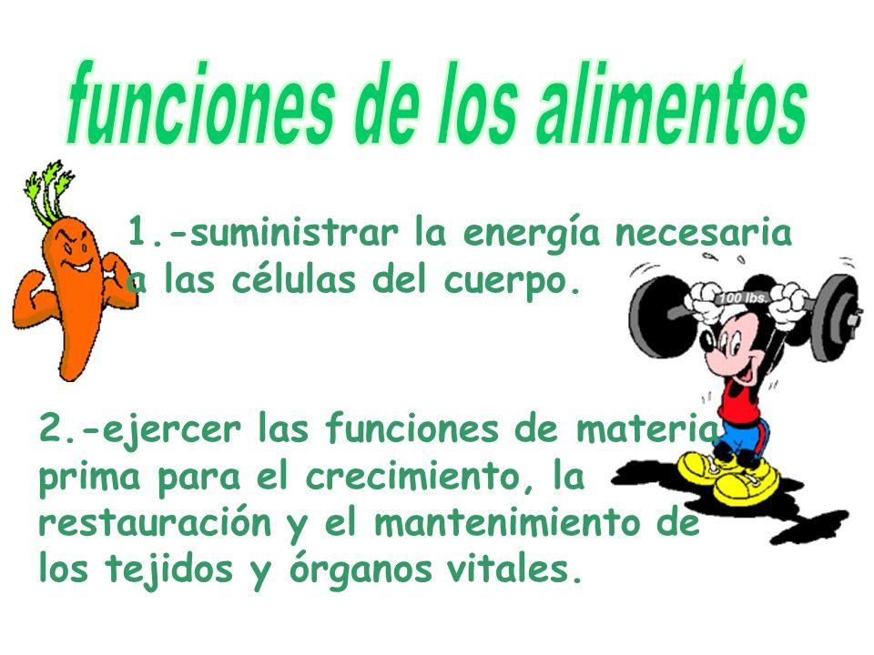 1.-suministrar la energía necesaria a las células del cuerpo.