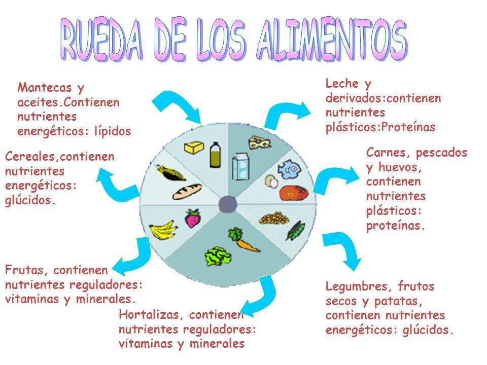 Alimentos energéticos: aquellos que son ricos en hidratos de carbono y/o grasas.Como son: el azúcar, los cereales, aceites y grasas y son muy ricos en