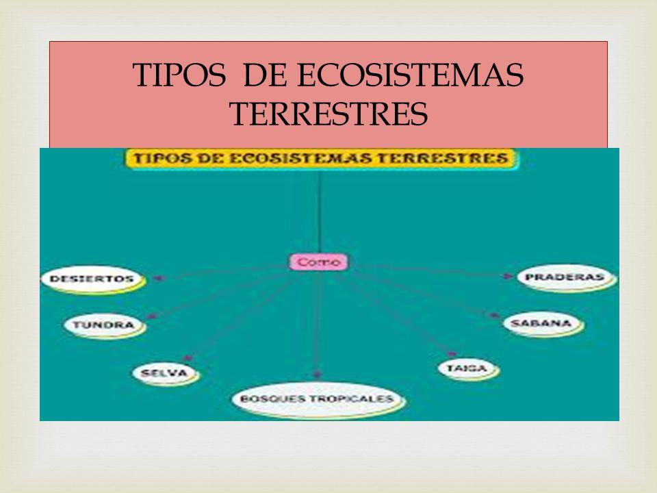 ECOSISTEMA TERRESTRE ECOSISTEMA ACUÁTICO