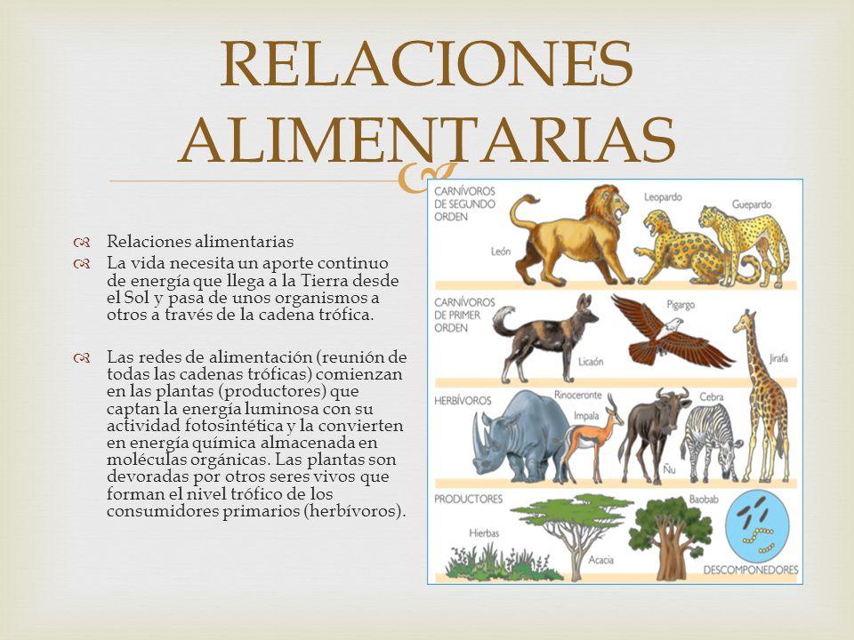 NICHO ECOLÓGICO Es el hábitat es el lugar físico de un ecosistema que reúne las condiciones naturales donde vive una especie y al cual se halla adapta