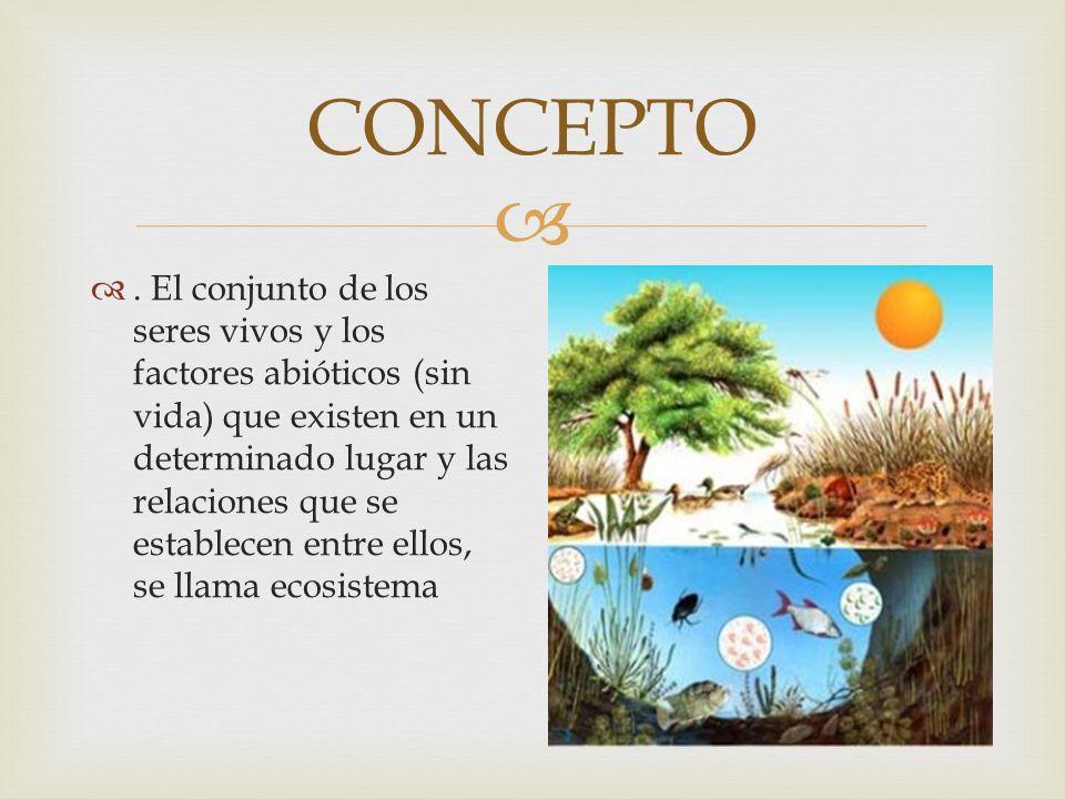 NICHO ECOLÓGICO Es el hábitat es el lugar físico de un ecosistema que reúne las condiciones naturales donde vive una especie y al cual se halla adaptada.