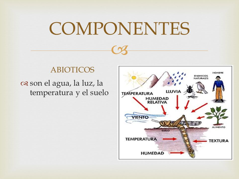 COMPONENTES ABIOTICOS son el agua, la luz, la temperatura y el suelo