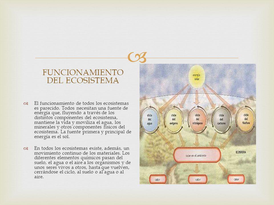 FUNCIONAMIENTO DEL ECOSISTEMA El funcionamiento de todos los ecosistemas es parecido.