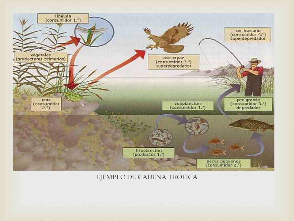 FUNCIONAMIENTO DEL ECOSISTEMA El funcionamiento de todos los ecosistemas es parecido. Todos necesitan una fuente de energía que, fluyendo a través de