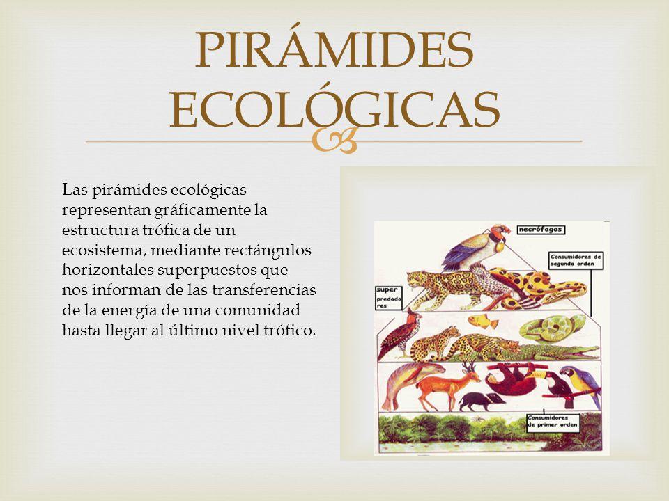 PIRÁMIDES ECOLÓGICAS Las pirámides ecológicas representan gráficamente la estructura trófica de un ecosistema, mediante rectángulos horizontales superpuestos que nos informan de las transferencias de la energía de una comunidad hasta llegar al último nivel trófico.