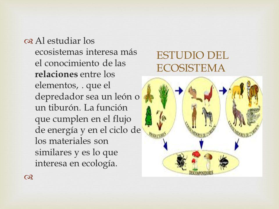 ESTUDIO DEL ECOSISTEMA Al estudiar los ecosistemas interesa más el conocimiento de las relaciones entre los elementos,.