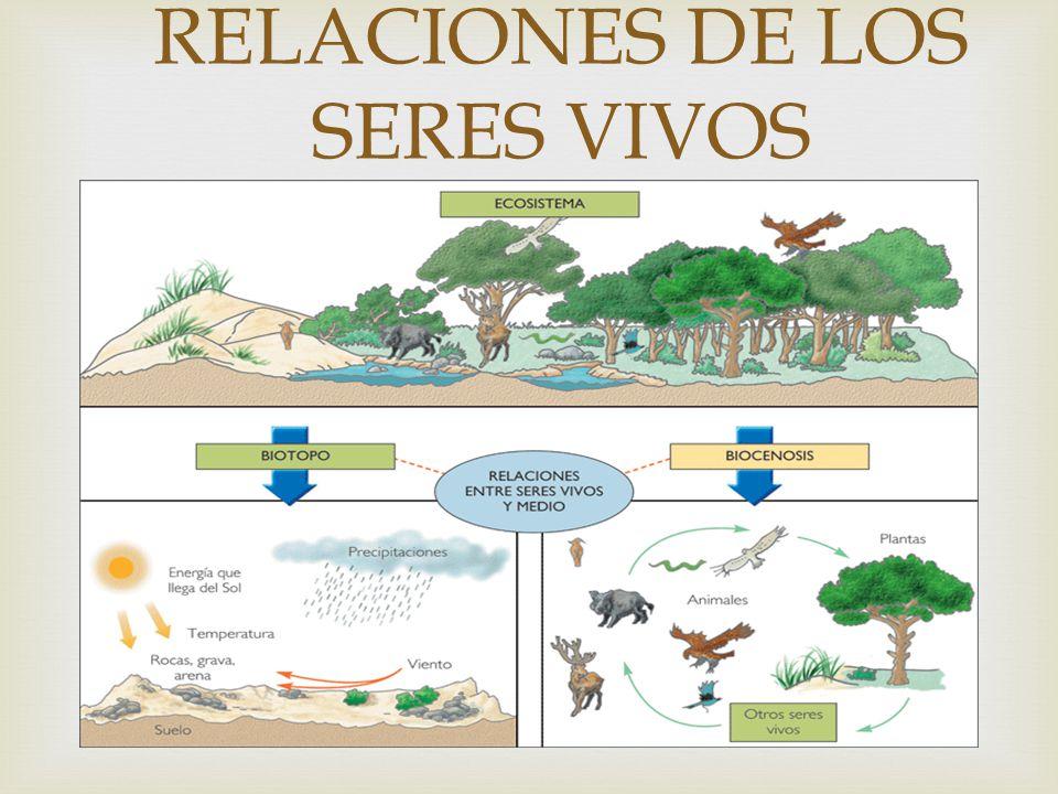 RELACIONES DE LOS SERES VIVOS