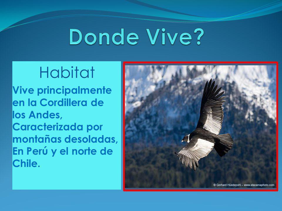 Habitat Vive principalmente en la Cordillera de los Andes, Caracterizada por montañas desoladas, En Perú y el norte de Chile.