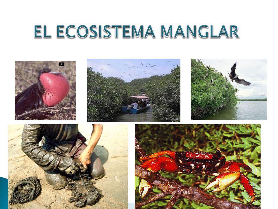 Un ecosistema es una unidad compuesta de organismos interdependientes que comparten el mismo hábitat.