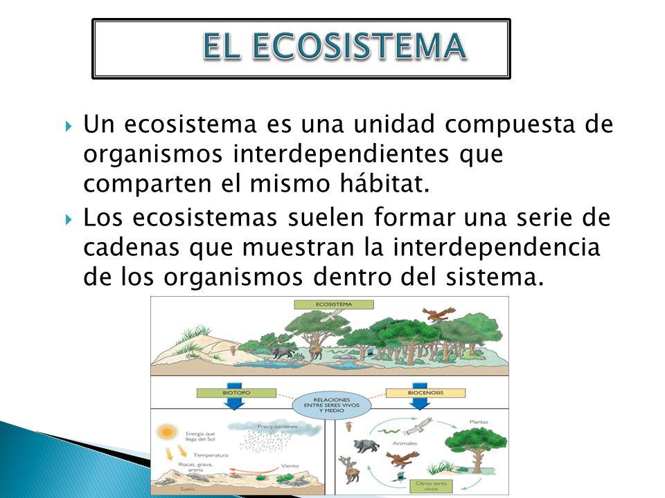 * Ecosistema terrestre: Aproximadamente una cuarta parte de la superficie terrestre esta formada por los continentes e islas que son la porción seca del planeta.