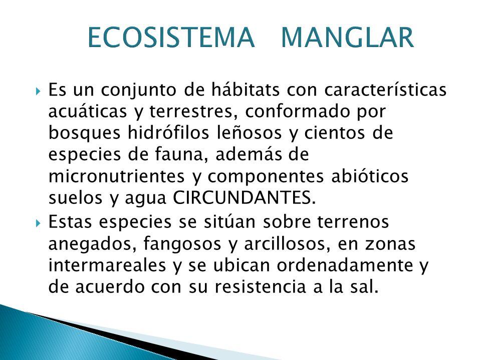 Es un conjunto de hábitats con características acuáticas y terrestres, conformado por bosques hidrófilos leñosos y cientos de especies de fauna, además de micronutrientes y componentes abióticos suelos y agua CIRCUNDANTES.